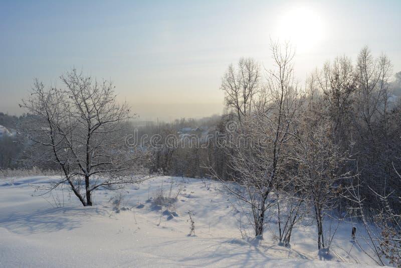 Paisagem bonita do inverno com as árvores nevados no dia gelado ensolarado foto de stock