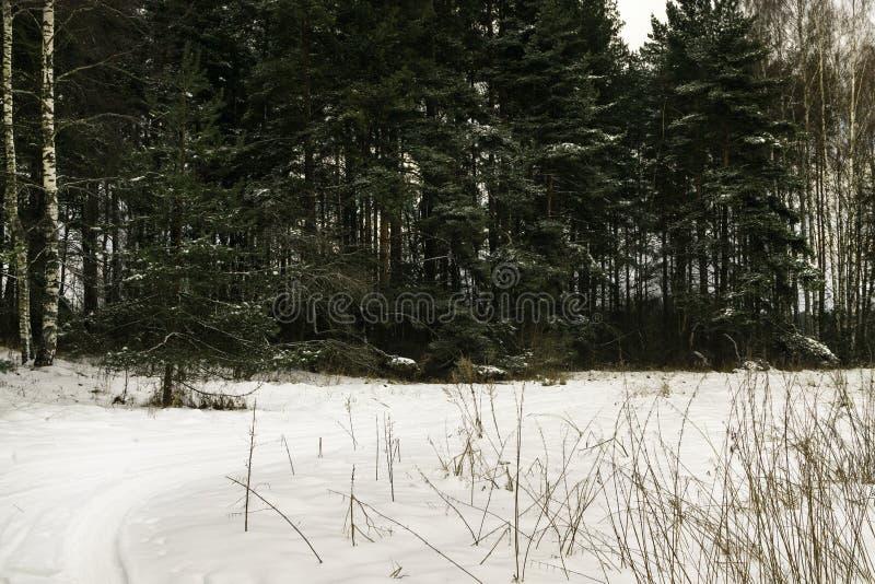 paisagem bonita do inverno com a floresta, a árvore nevado do inverno e a estrada da geada fotografia de stock