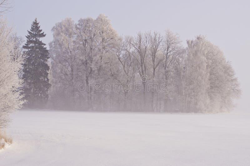 Paisagem bonita do inverno com geada e névoa foto de stock