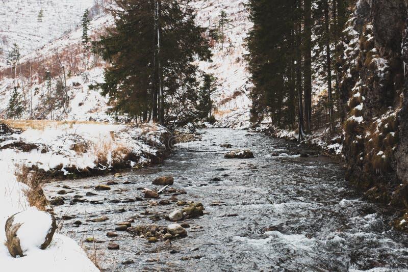 Paisagem bonita do inverno com um córrego e as árvores da montanha cobertos com a neve imagens de stock royalty free