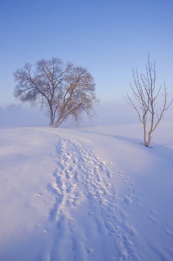 Paisagem bonita do inverno do amanhecer fotografia de stock