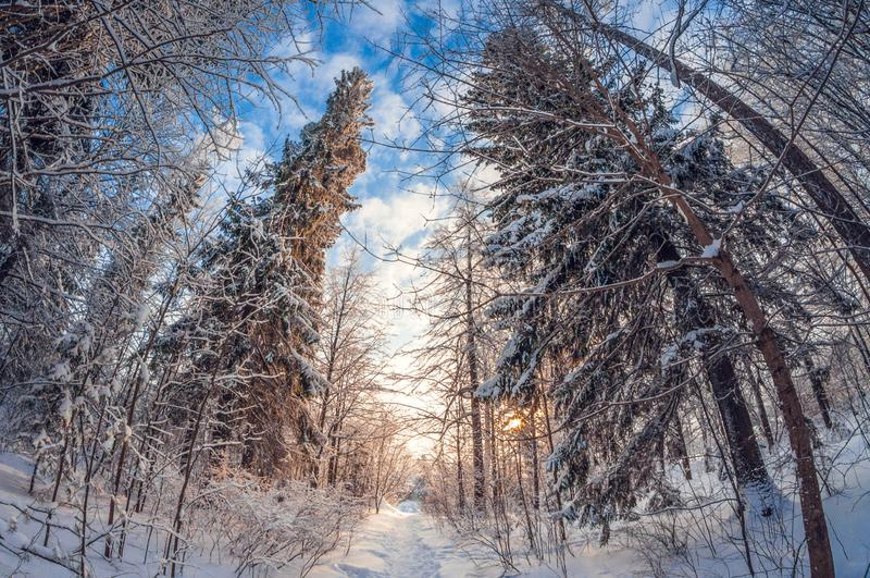 Paisagem bonita do inverno, um trajeto em uma floresta nevado em um dia ensolarado, quando a neve cairia, distorção do fisheye fotografia de stock royalty free