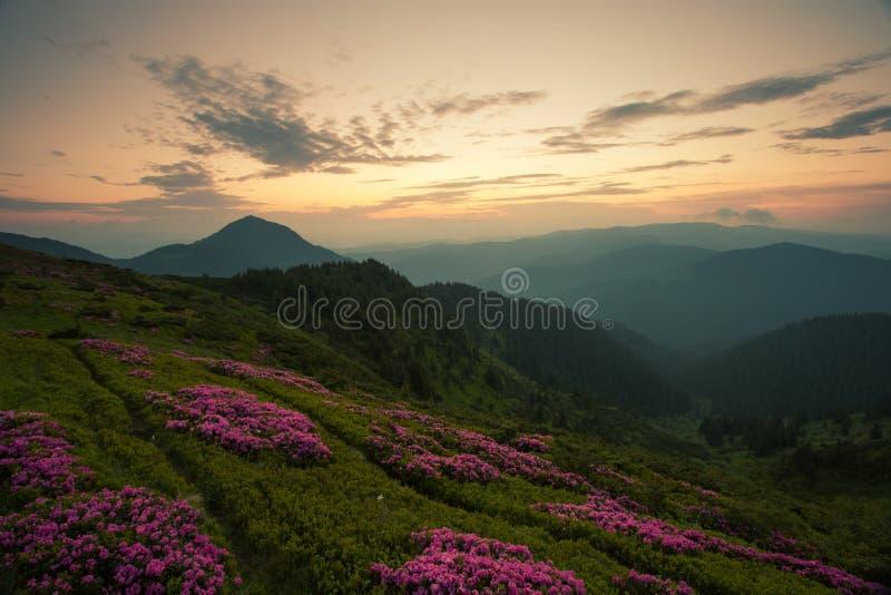 Paisagem bonita do nascer do sol de Carpathians do verão fotografia de stock