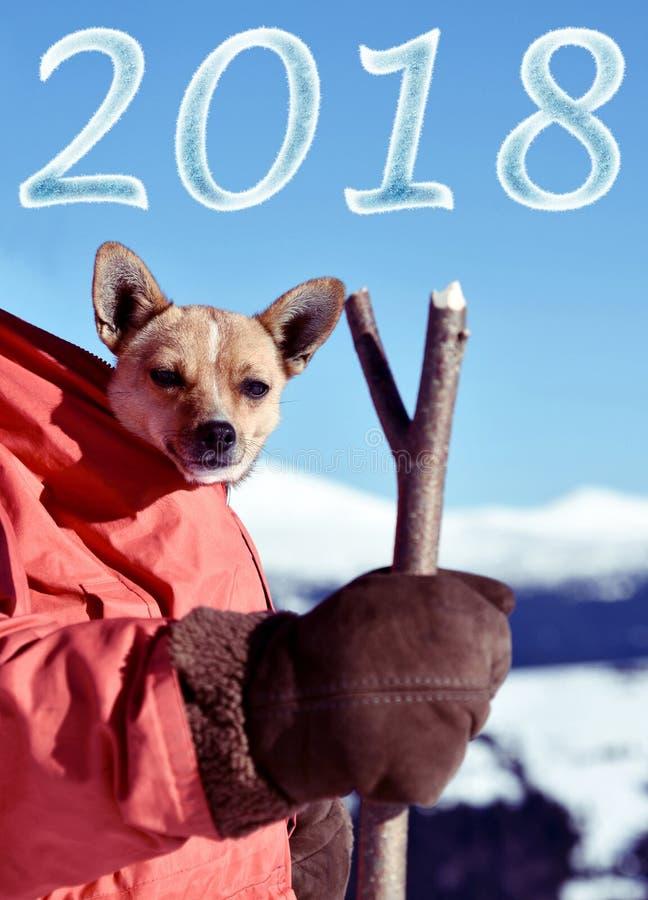 Paisagem bonita do Natal com cachorrinhos bonitos em um costu de Santa fotos de stock royalty free