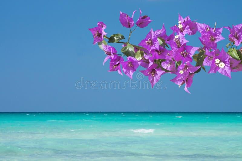 Paisagem bonita do oceano e flores cor-de-rosa da buganvília fotografia de stock