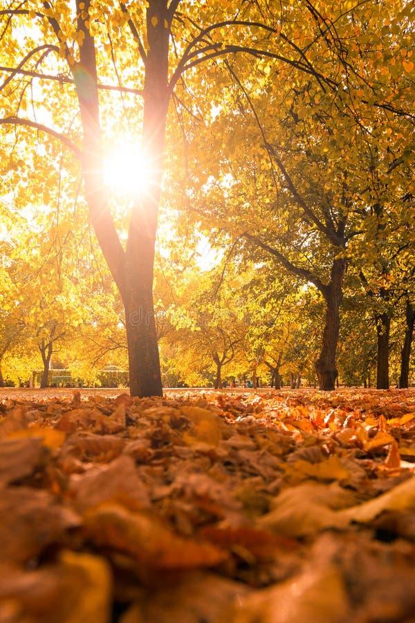 Paisagem bonita do outono imagens de stock royalty free