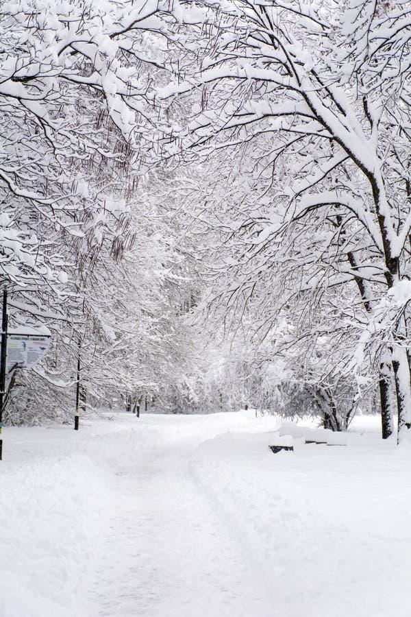Paisagem bonita do parque do inverno de Sófia, Bulgária fotos de stock