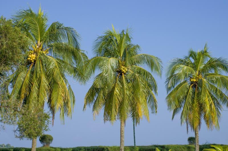 Paisagem bonita do porto tropical Blair India das árvores imagens de stock