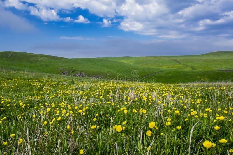 Paisagem bonita do verão, campo de flor amarelo nos montes fotos de stock
