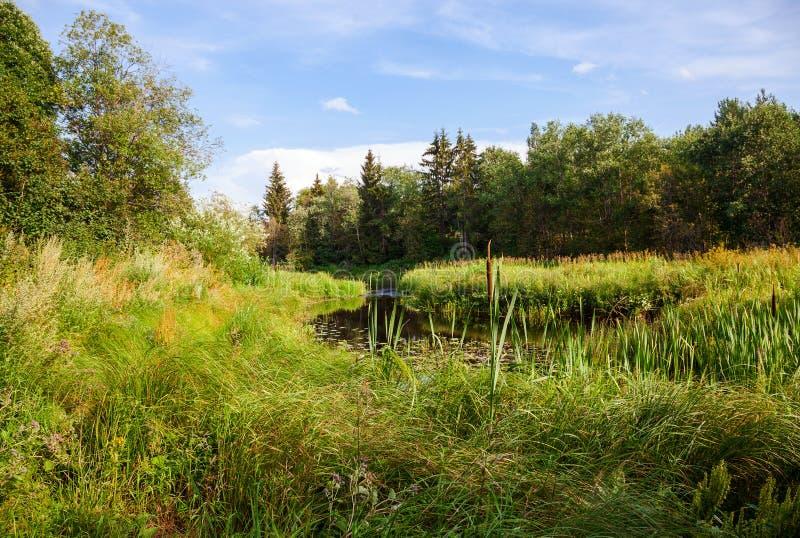 Paisagem bonita do verão com o rio tranquilo pequeno fotos de stock