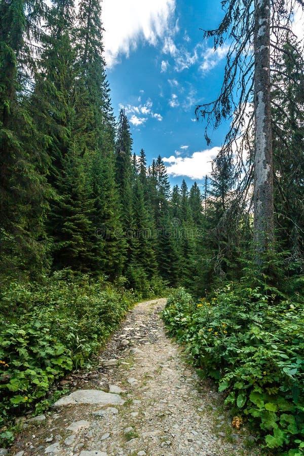 Paisagem bonita do verão - estrada de floresta Carpathians, Ucrânia fotografia de stock