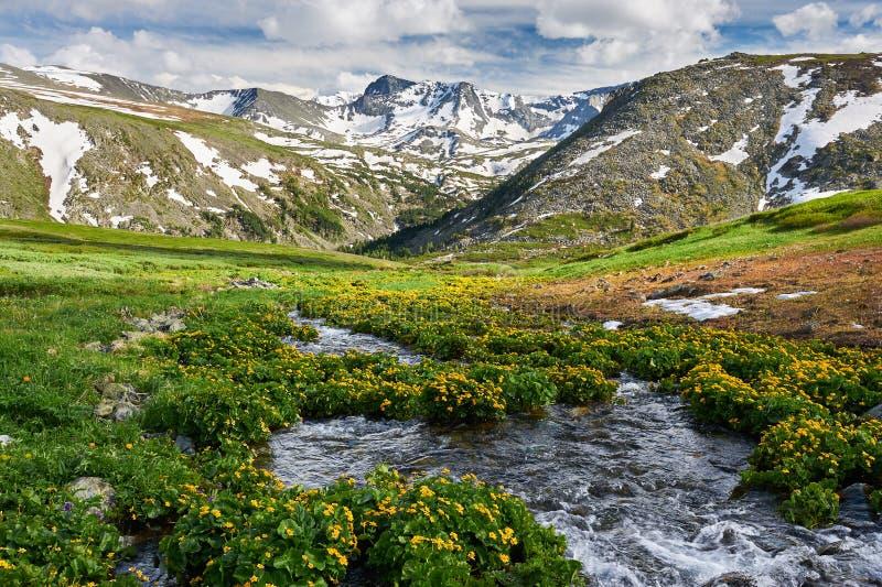 Paisagem bonita do verão, montanhas Rússia de Altai foto de stock royalty free