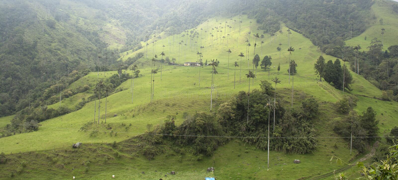 Paisagem bonita em Valle de Cocora, Salento, Colômbia fotografia de stock