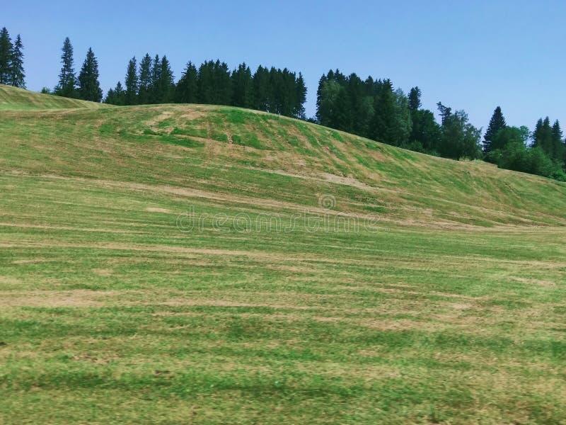 Paisagem bonita, floresta dos pinheiros, campo de grama verde, vale do cenário nas montanhas foto de stock royalty free
