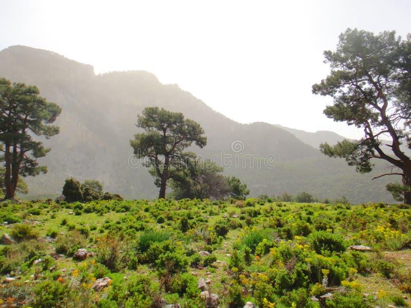 Paisagem bonita morna da montanha Montanhas na névoa, árvores verdes, grama do verão entre pedras Viagem nas montanhas fotos de stock royalty free