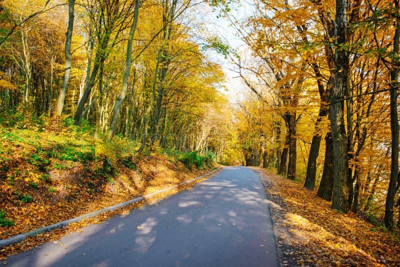 Paisagem brilhante e cênico da estrada nova através das árvores do auttumn com a folha alaranjada e amarela caída imagens de stock