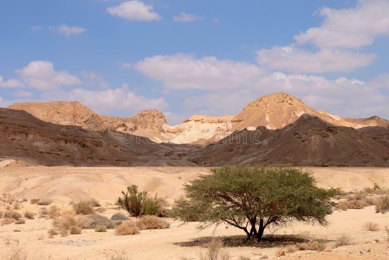 Paisagem cênico do deserto do Negev fotos de stock royalty free