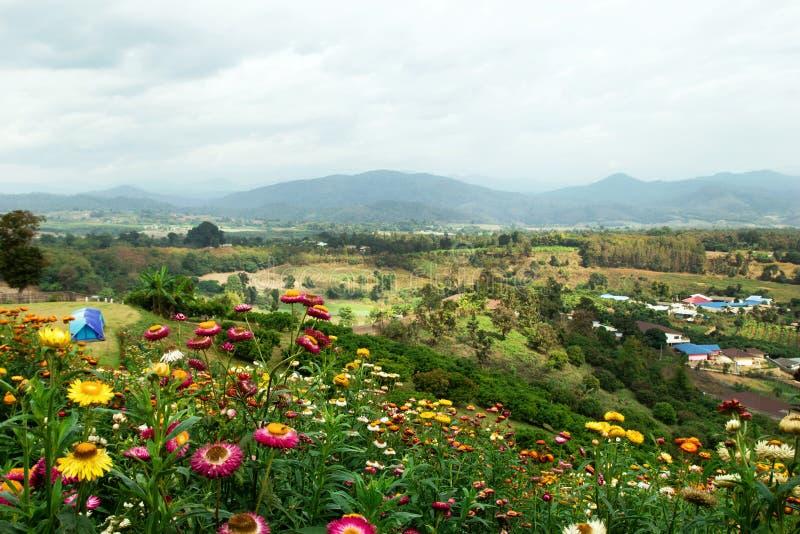 Paisagem cênico nas montanhas, na vila pequena, nas barracas e em um campo de crisântemos coloridos no primeiro plano fotografia de stock