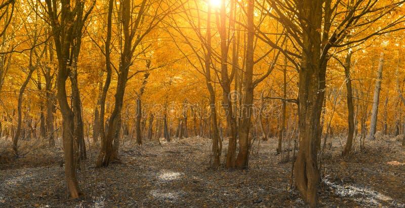 Paisagem calma do outono nas madeiras fotografia de stock