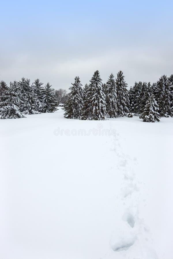 Paisagem canadense do inverno fotos de stock royalty free