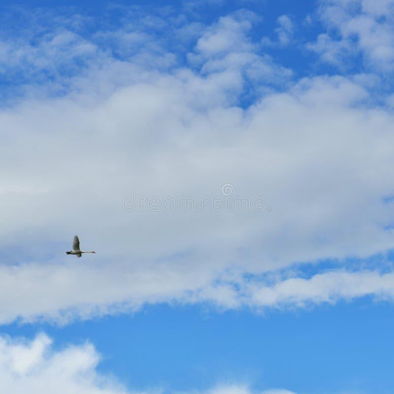 Paisagem celestial com cisne do voo fotos de stock