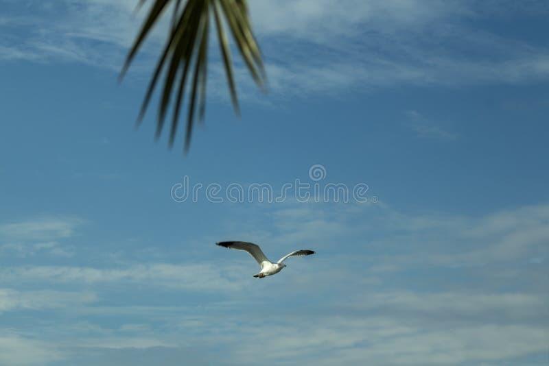 Paisagem celestial com gaivota do voo e detalhe de palmeira foto de stock