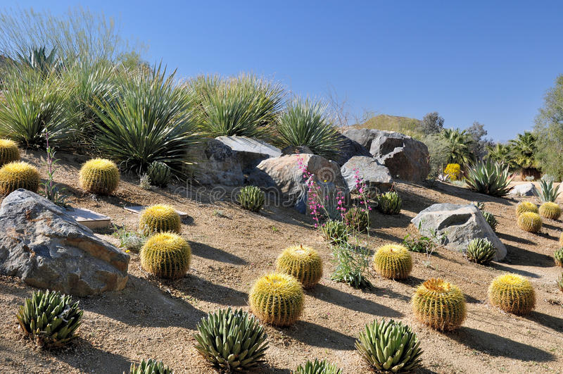 Paisagem colorida do deserto imagens de stock royalty free