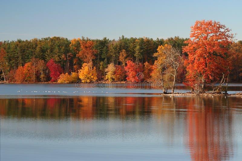 A paisagem colorida do outono com floresta refletiu no lago fotos de stock