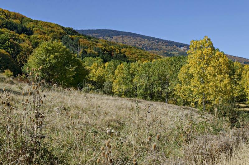 Paisagem colorida do outono da floresta amarela das árvores do antumnal, a conífera e a decíduo com a clareira na montanha de Vit fotos de stock