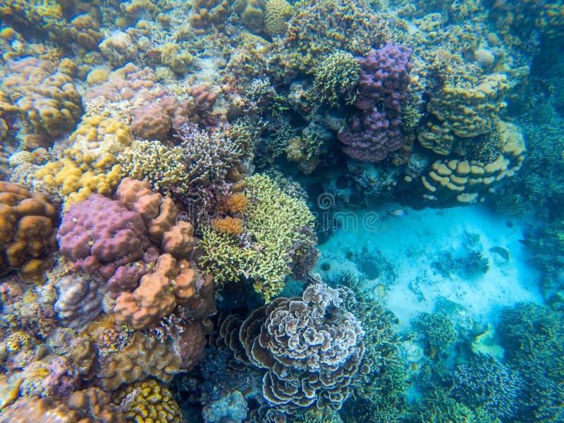 Paisagem colorida do recife de corais debaixo d'água Animal marinho na natureza selvagem Opini?o de Coral Reef Ambiente tropical  imagens de stock royalty free