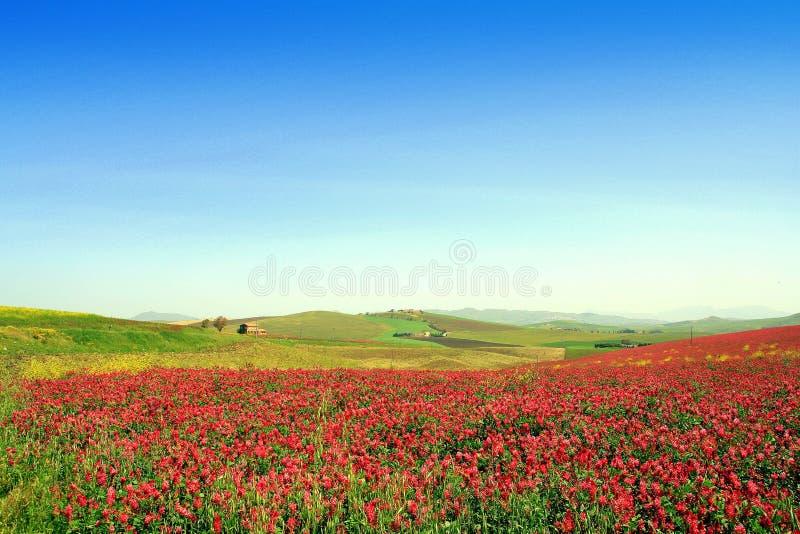 Paisagem colorida do vale. Italy imagens de stock