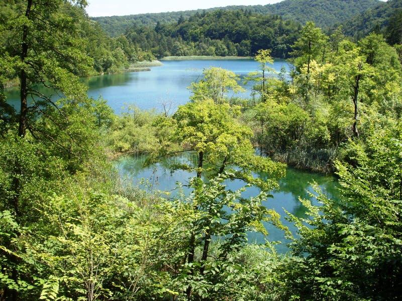 Paisagem colorida e vibrante da costa do lago Paisagem tranquilo útil como o fundo Abaixe a garganta dos lagos Lagos Plitvice nac imagens de stock