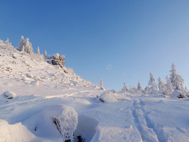 Paisagem colorida na floresta da montanha do inverno imagens de stock royalty free