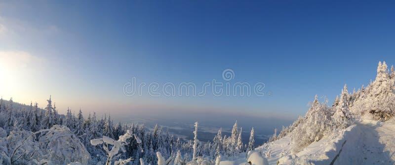 Paisagem colorida na floresta da montanha do inverno foto de stock