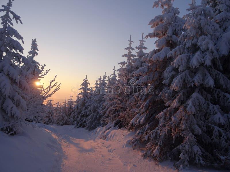 Paisagem colorida no nascer do sol do inverno na floresta da montanha fotos de stock royalty free