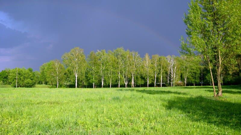 Paisagem com as grandes nuvens e árvores chuvosas foto de stock royalty free