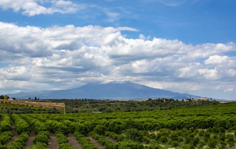Paisagem com as plantações das árvores da laranja e de limão e vista em Monte Etna, Sicília, agricultura em Itália imagens de stock royalty free