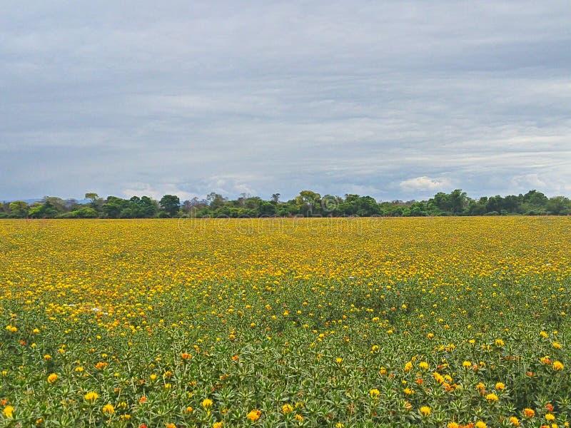 Paisagem com flores amarelas foto de stock