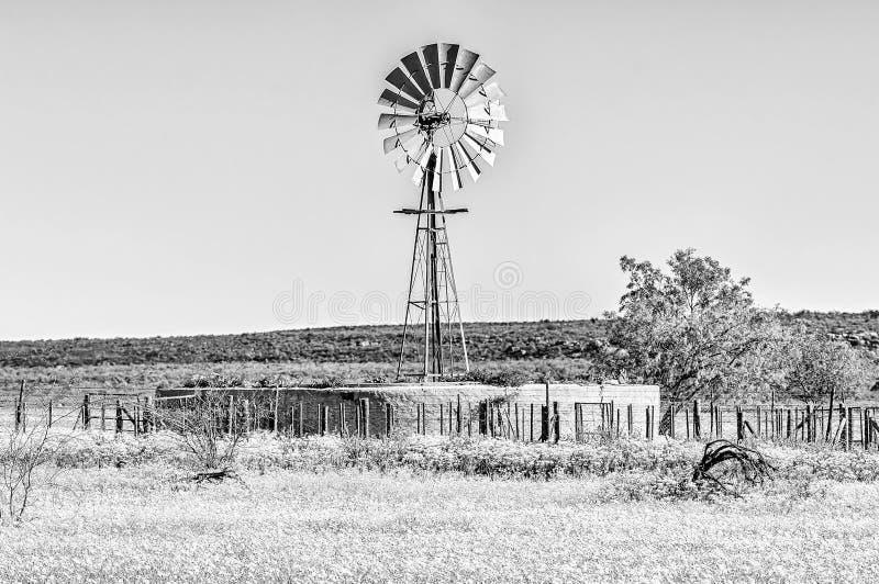 Paisagem com moinho de vento e flores em Matjiesfontein perto de Nieuwoudtville monocromático foto de stock royalty free