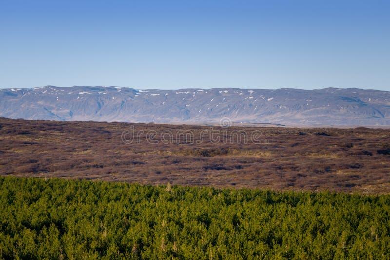 Paisagem com montanhas e floresta fotografia de stock royalty free