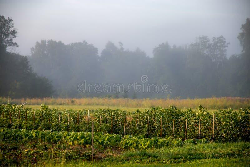 Paisagem com névoa no jardim vegetal fotos de stock royalty free