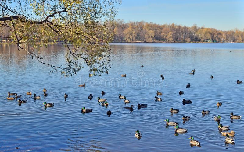 Paisagem com o lago perto da igreja no outono fotografia de stock