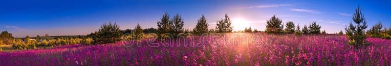Paisagem com o prado de florescência, nascer do sol do verão imagens de stock