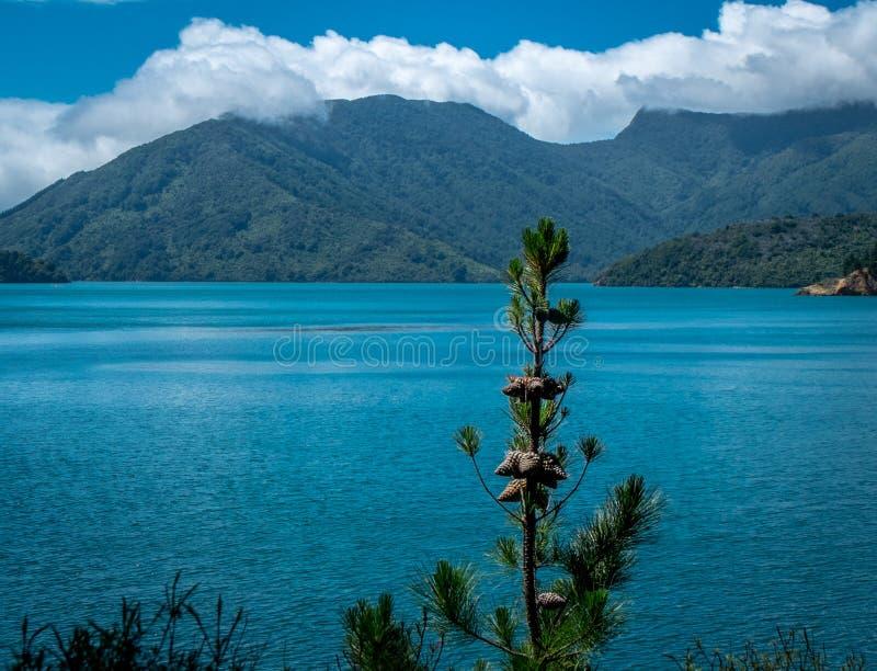 Paisagem com oceano, montanhas e árvores Ba?a de Tasman, ?rea de Nelson, Nova Zel?ndia fotos de stock