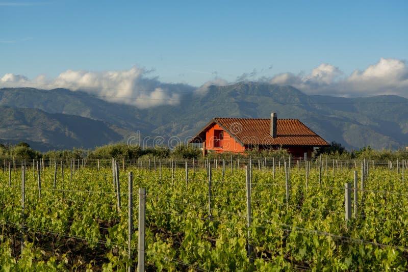 Paisagem com os vinhedos verdes na região do vulcão de Etna com solo rico mineral em Sicília, Itália imagens de stock