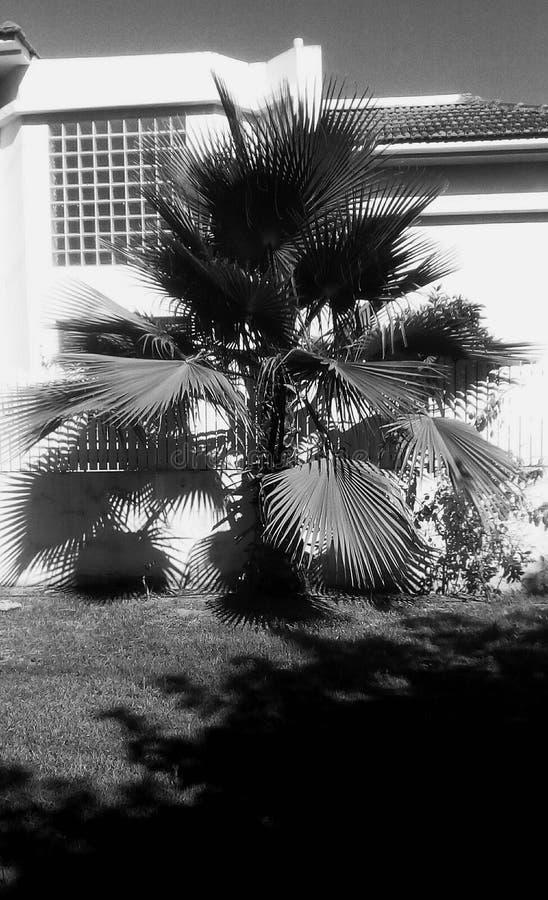 Paisagem com palmeira de Bismarck imagem de stock