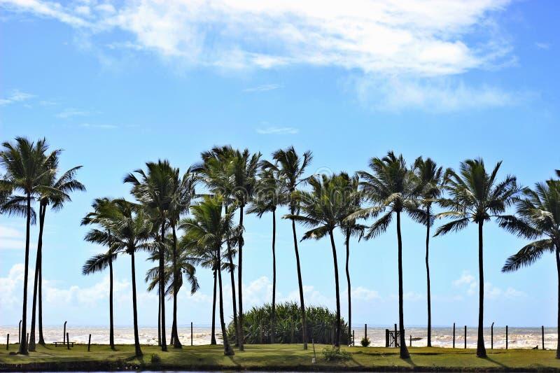 Paisagem com palmeiras fotos de stock royalty free
