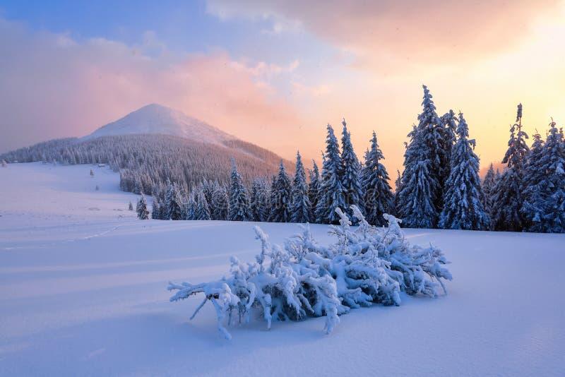 A paisagem com parte superior da montanha e nascer do sol em cores mornas fotos de stock