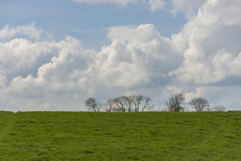 Paisagem com silhuetas da árvore no fundo e em um campo no primeiro plano C?u nebuloso em um dia ensolarado imagem de stock