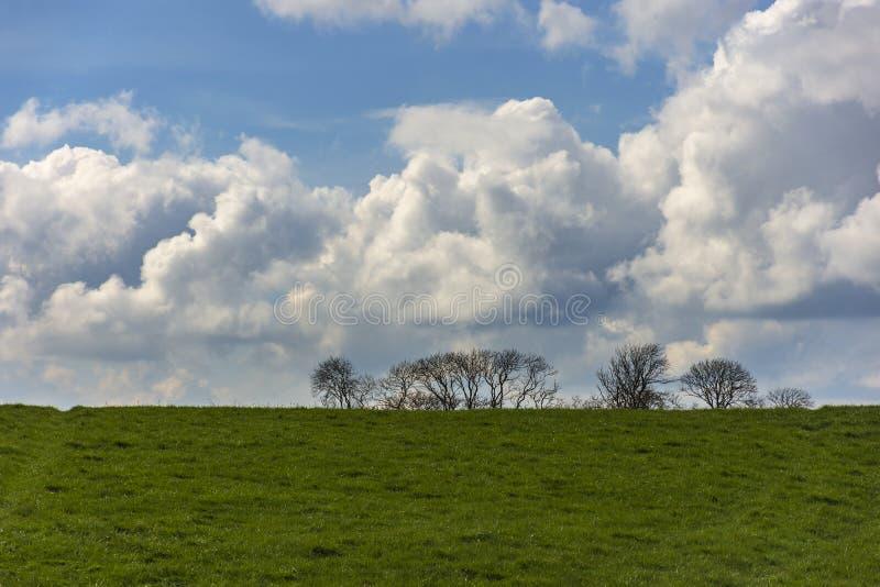 Paisagem com silhuetas da ?rvore no fundo e em um campo no primeiro plano C?u nebuloso em um dia ensolarado fotografia de stock
